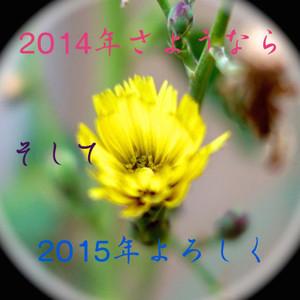 Th_dsc02907_2