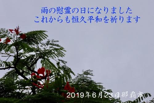Th_img_0431
